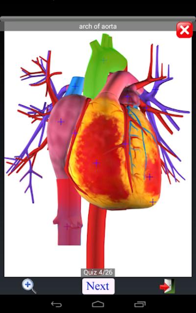 Anatomy Quiz Free screenshot 13