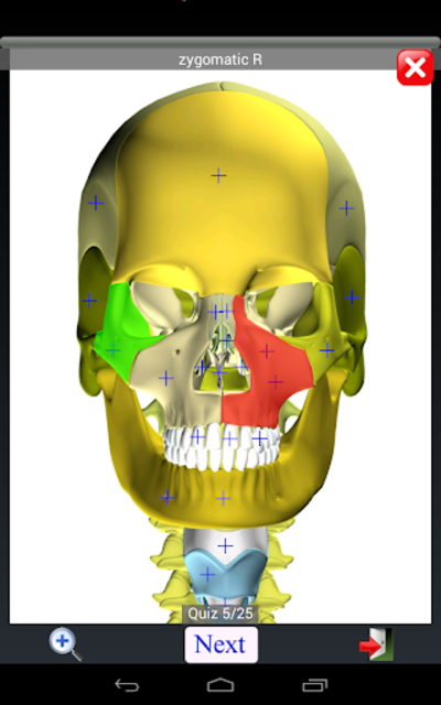 Anatomy Quiz Free screenshot 15