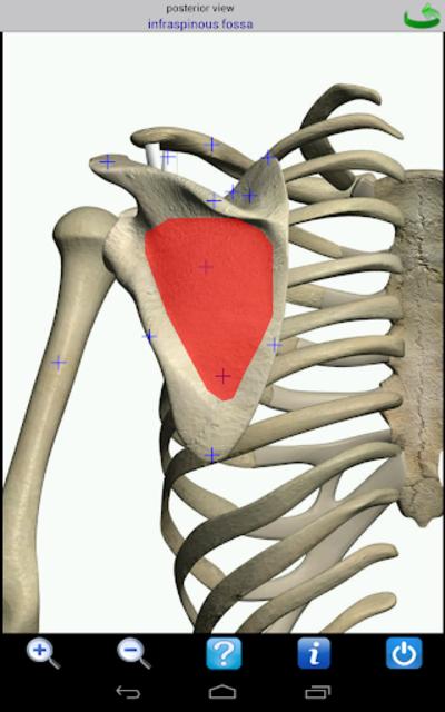 Visual Anatomy screenshot 23