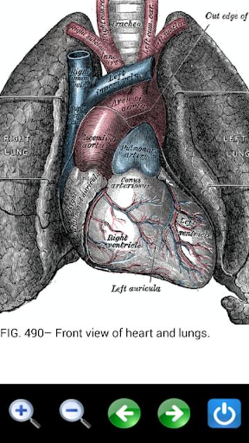 Visual Anatomy 2 screenshot 8