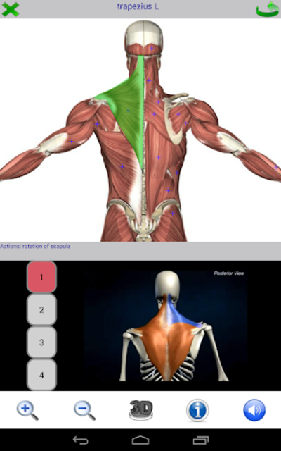 Visual Anatomy 2 screenshot 17