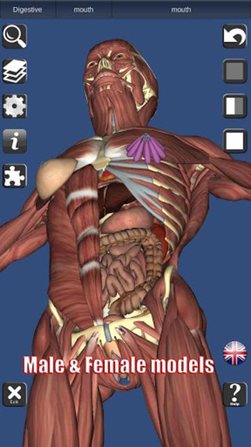 3D Bones and Organs (Anatomy) screenshot 2