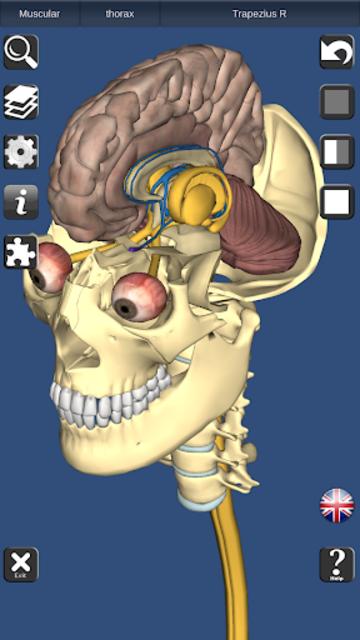 3D Bones and Organs (Anatomy) screenshot 5
