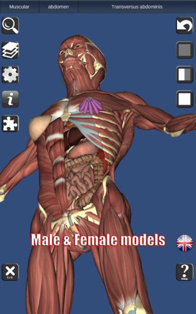3D Bones and Organs (Anatomy) screenshot 18