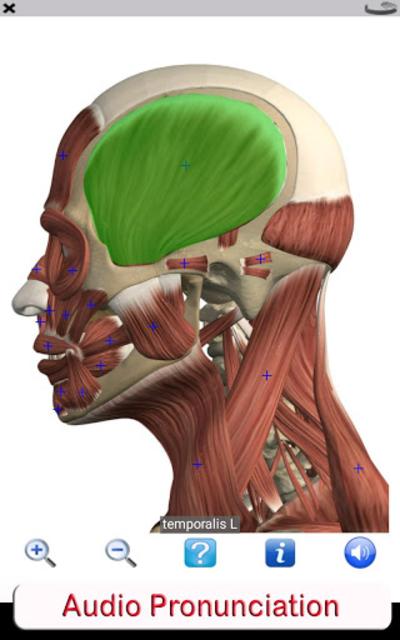 Visual Anatomy Free screenshot 10