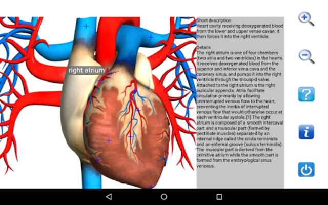 Visual Anatomy Free screenshot 12