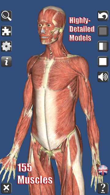 Visual Muscles 3D screenshot 1