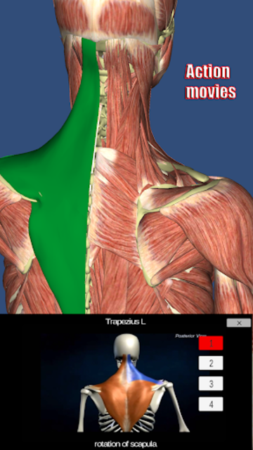 Visual Muscles 3D screenshot 3