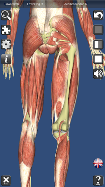 Visual Muscles 3D screenshot 16