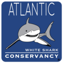 Icon for Sharktivity - White Shark App