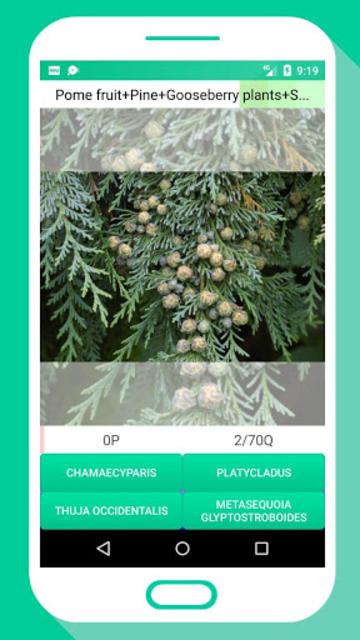 Tree Identifier App - Los árboles screenshot 3