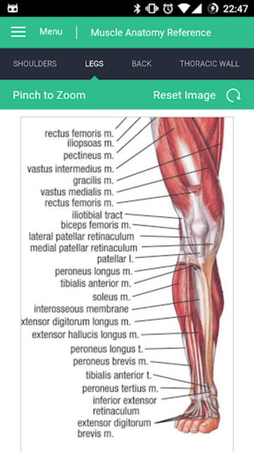 Muscle Anatomy Reference Guide screenshot 3