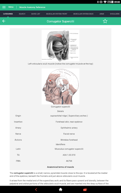 Muscle Anatomy Reference Guide screenshot 12