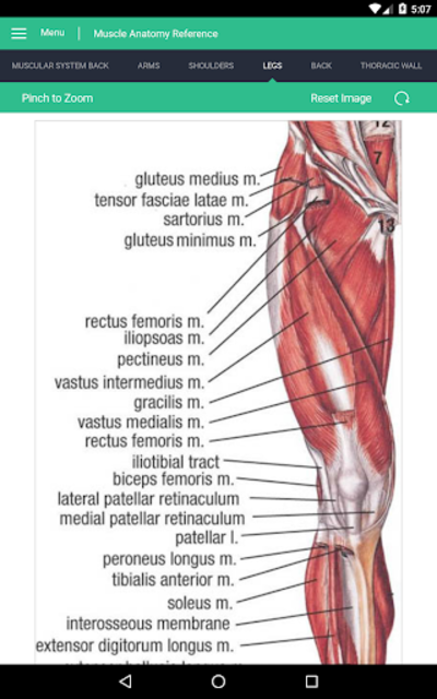 Muscle Anatomy Reference Guide screenshot 18