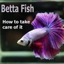 Icon for Betta Fish