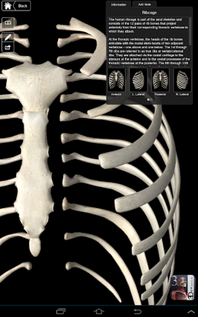 Essential Skeleton 3 screenshot 10