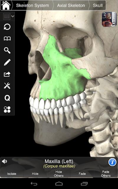Essential Skeleton 3 screenshot 21