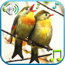 Icon for Birds Sounds & Ringtones