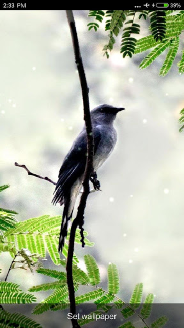Birds Sounds & Ringtones screenshot 6