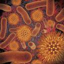 Icon for Infectious Disease Compendium