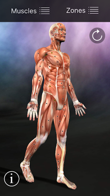 Muscle Trigger Point Anatomy screenshot 1