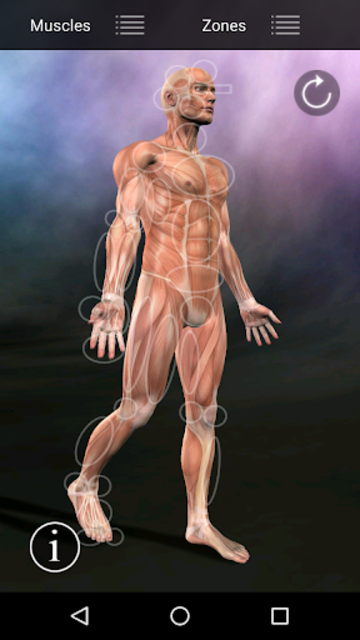 Muscle Trigger Point Anatomy screenshot 14