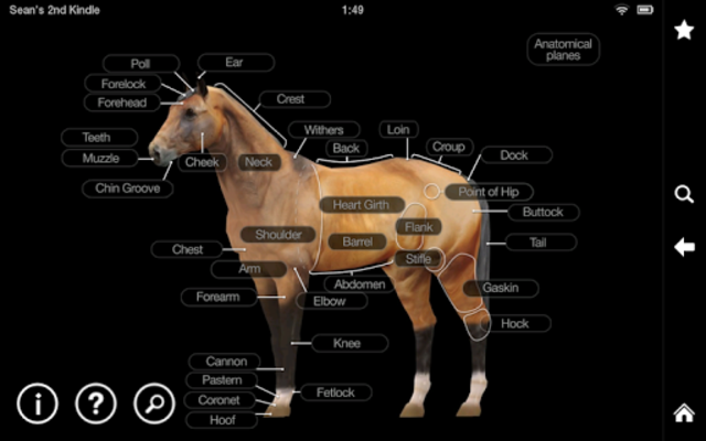 Horse Anatomy: Equine 3D screenshot 10