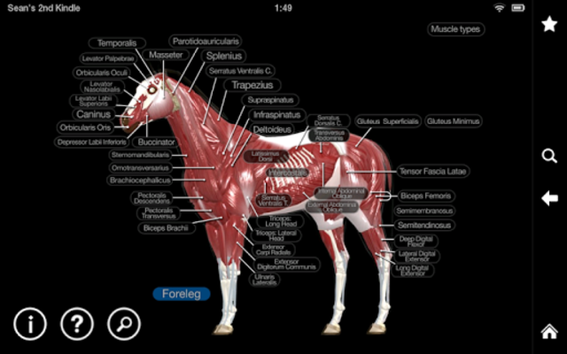 Horse Anatomy: Equine 3D screenshot 16
