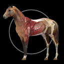 Icon for Horse Anatomy: Equine 3D