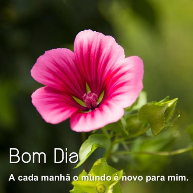 About Good Morning Flower In Portuguese Google Play Version