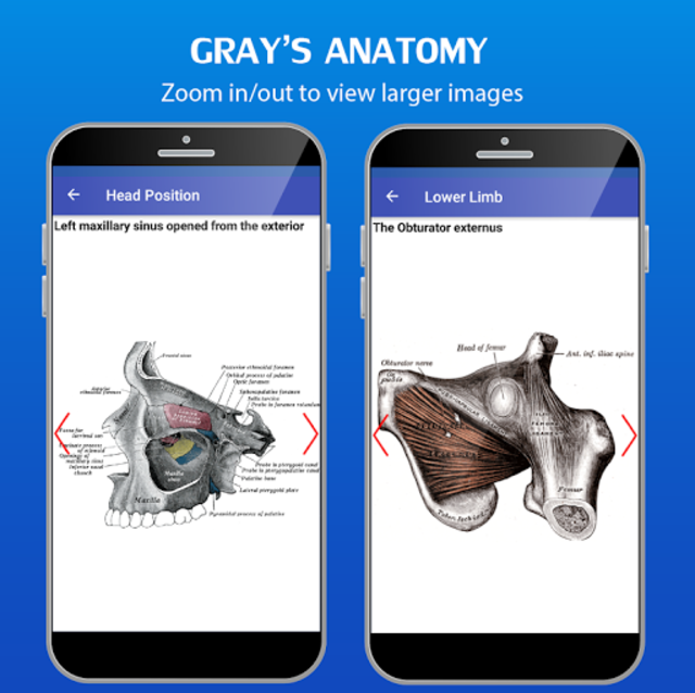 Gray's Anatomy - Anatomy Atlas 2020 screenshot 4