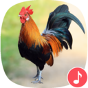 Icon for Appp.io - Rooster Sound Ringtones