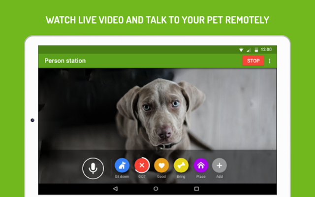 Dog Monitor: Puppy video cam screenshot 12