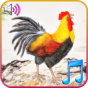 Icon for Funny Wake Up Ringtones