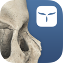 Icon for 3D Skull Atlas