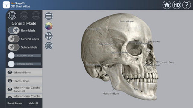3D Skull Atlas screenshot 1