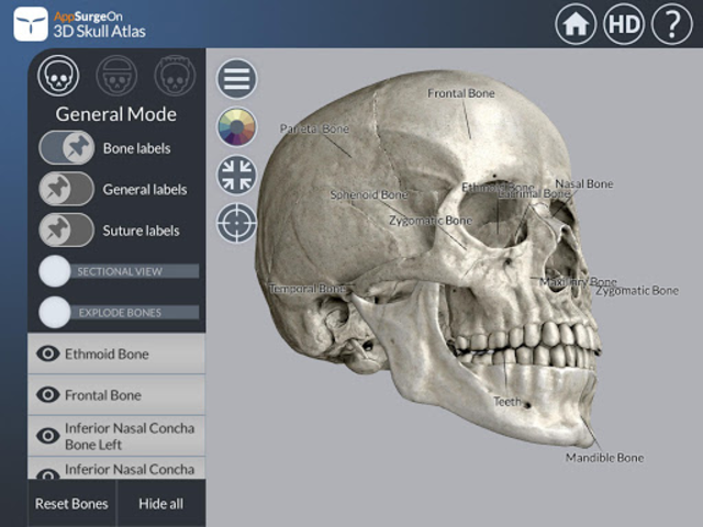 3D Skull Atlas screenshot 6