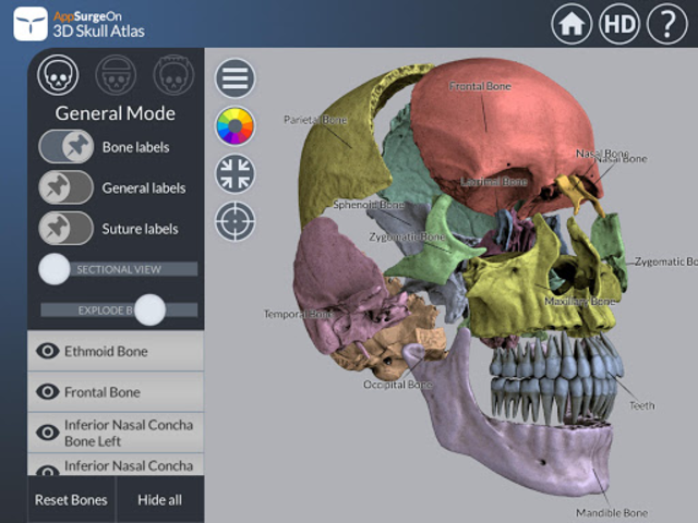 3D Skull Atlas screenshot 9