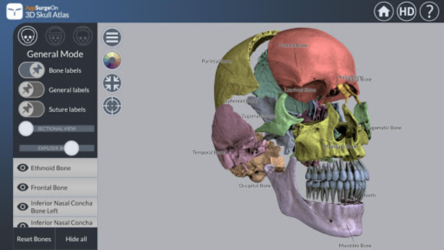 3D Skull Atlas screenshot 14
