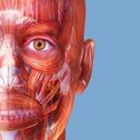 Icon for Muscle Premium - Human Anatomy, Kinesiology, Bones