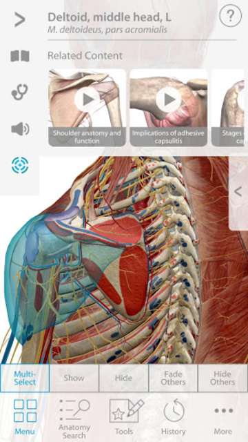 Muscle Premium - Human Anatomy, Kinesiology, Bones screenshot 1