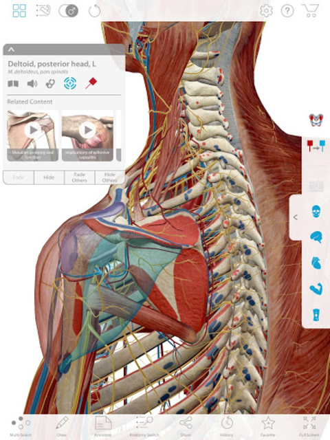 Muscle Premium - Human Anatomy, Kinesiology, Bones screenshot 6