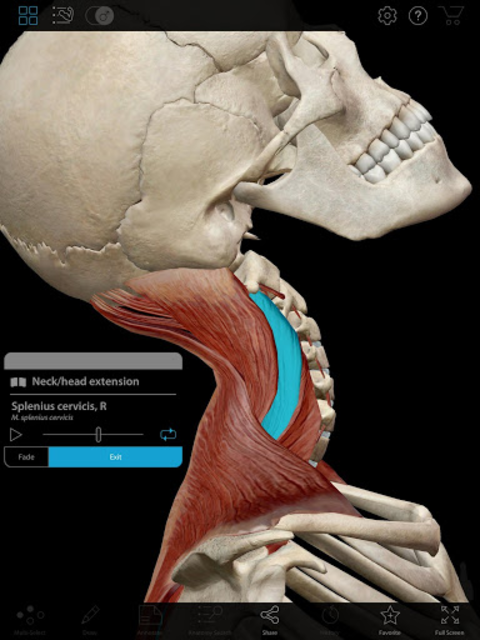 Muscle Premium - Human Anatomy, Kinesiology, Bones screenshot 9