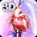 Icon for Circulatory System Anatomy