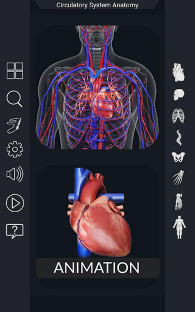 Circulatory System Anatomy screenshot 1