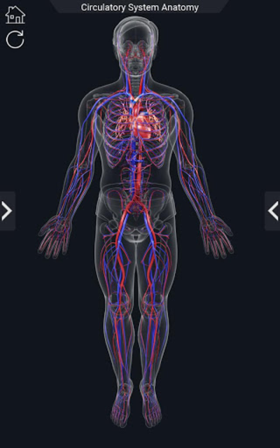Circulatory System Anatomy screenshot 2