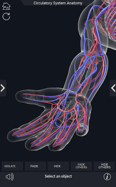 Circulatory System Anatomy screenshot 5