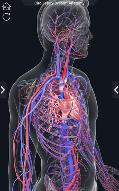 Circulatory System Anatomy screenshot 7