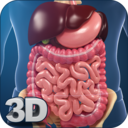 Icon for Digestive System Anatomy