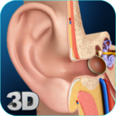 Icon for My Ear Anatomy